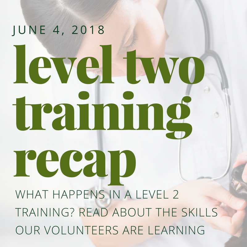 Level Two Training Recap - What happens in a Level 2 Training? Read about the skills our volunteers are learning.