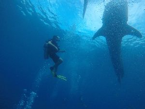 A picture of Benjamin Cehelsky scuba diving during his Study Abroad