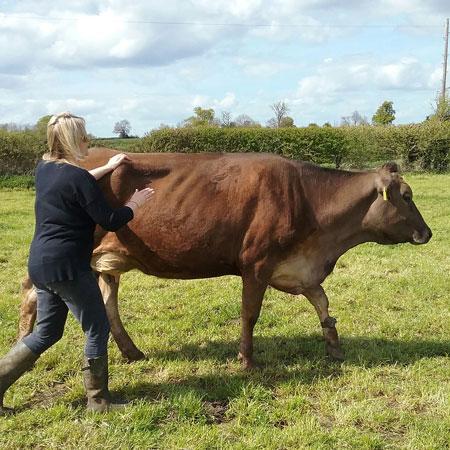 Free Range Dairy | Great Taste Award