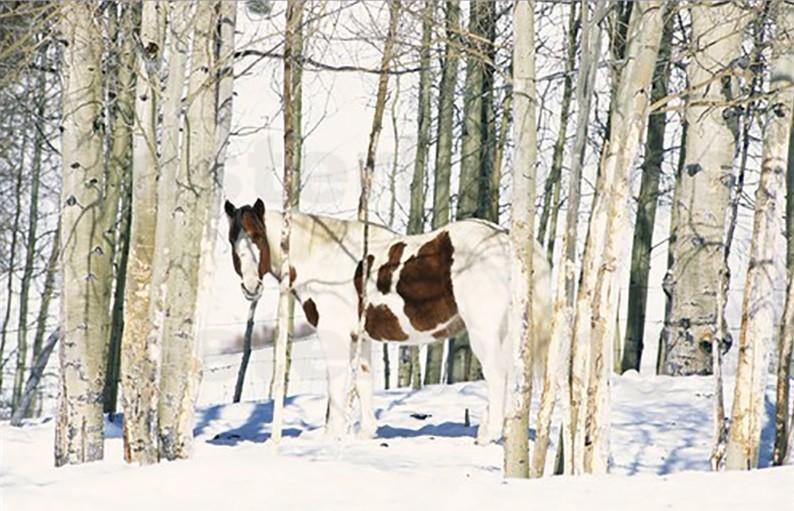 Fotowedstrijd 'Paard & Landschap'