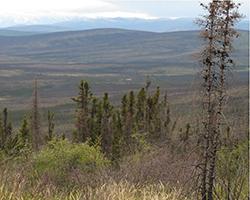 Disturbed Arctic Forest