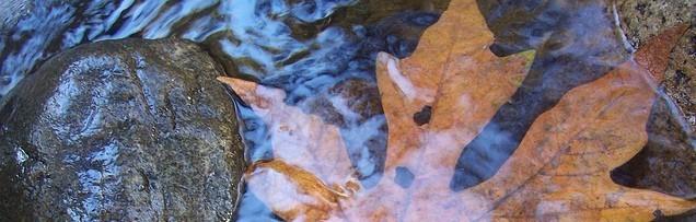leaf in a stream
