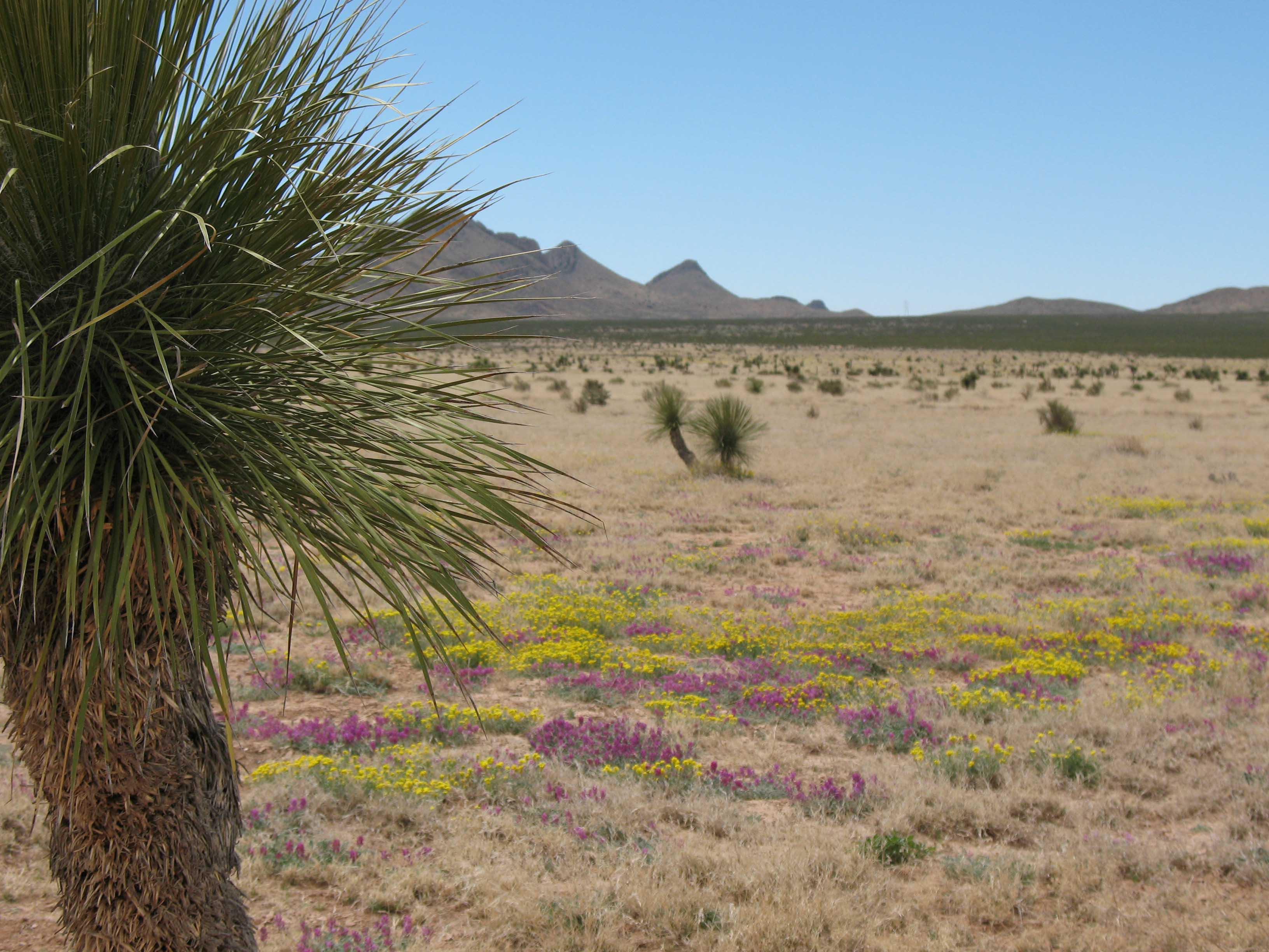 moxed grass and shrublands at Jornada LTER