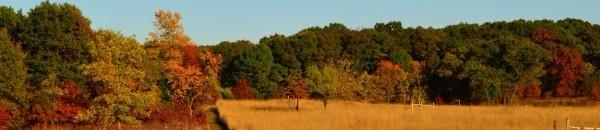 Fall leaves at Cedar Creek