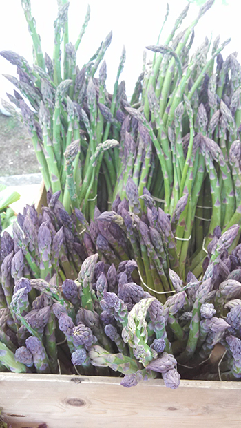 Asparagus is in season at the farmers' market