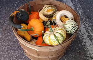 Coppal House gourds