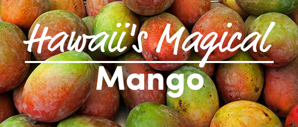 Hawaii's Magical Mango