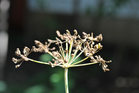Dry Seeds