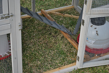 Chicken Coop - Side