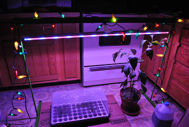 Jalapeno Lights