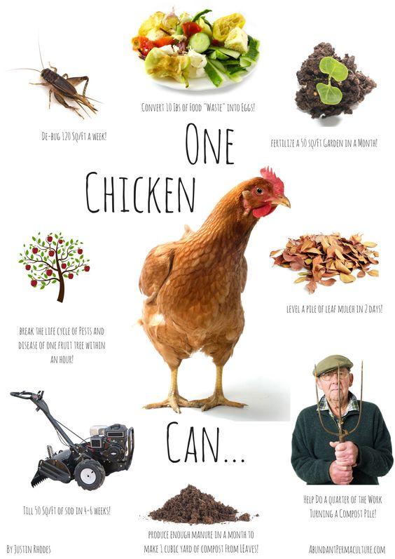 One Chicken