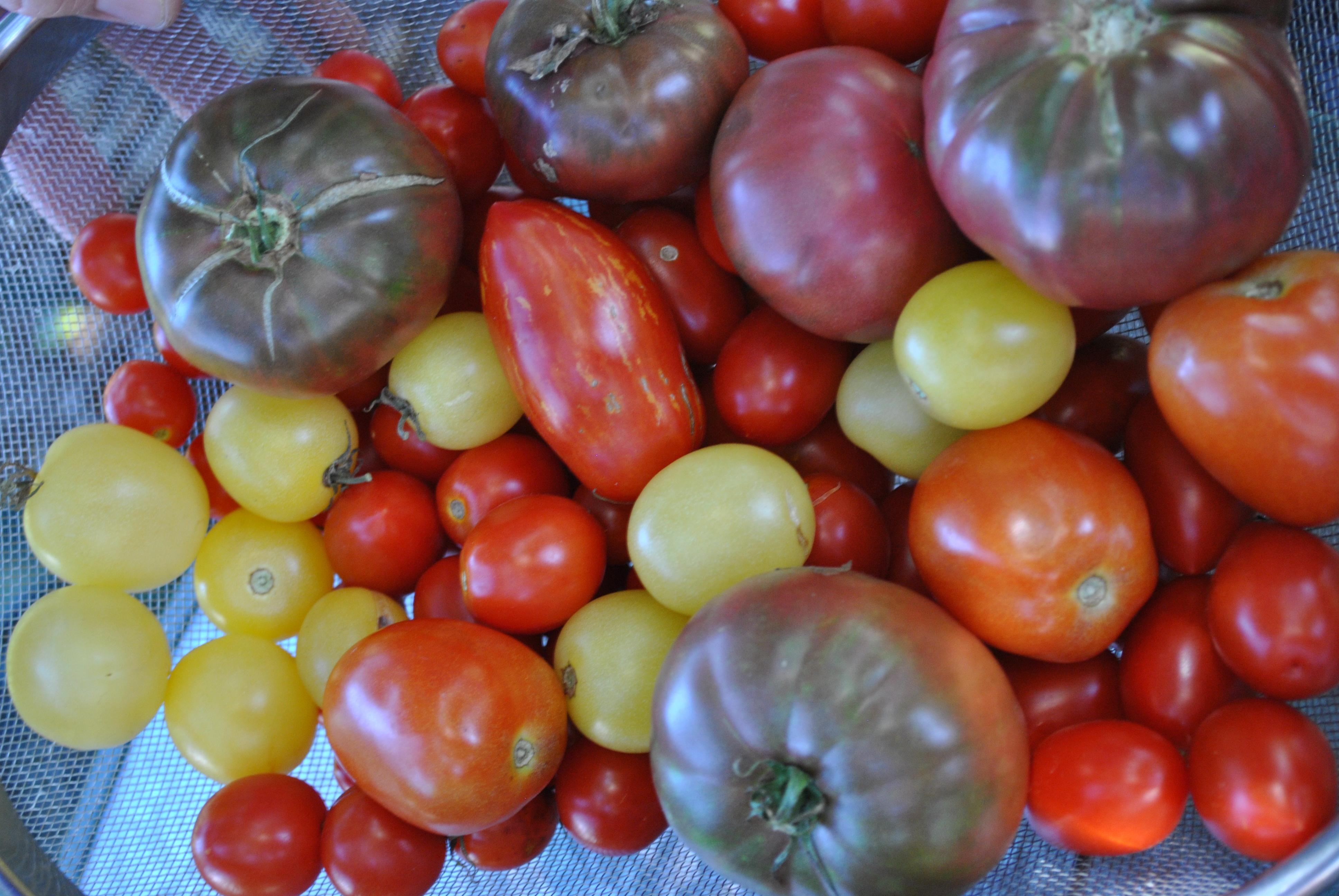 Ferment Seeds