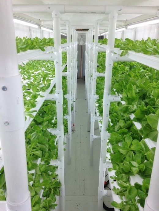 Hydroponics In A Container