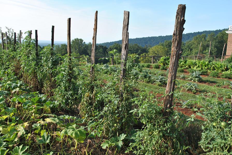 Organically Grown - In Dirt