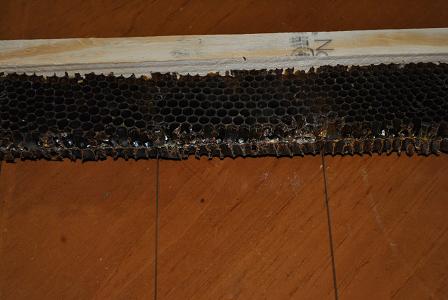 Starter Comb