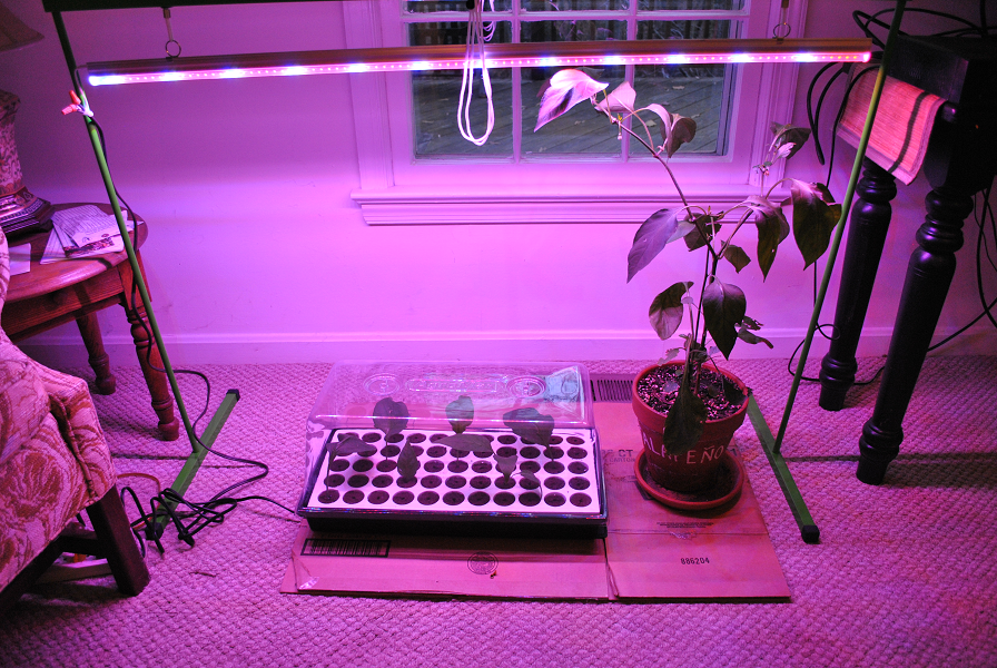 Indoor Growing