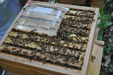Bee Feedbag