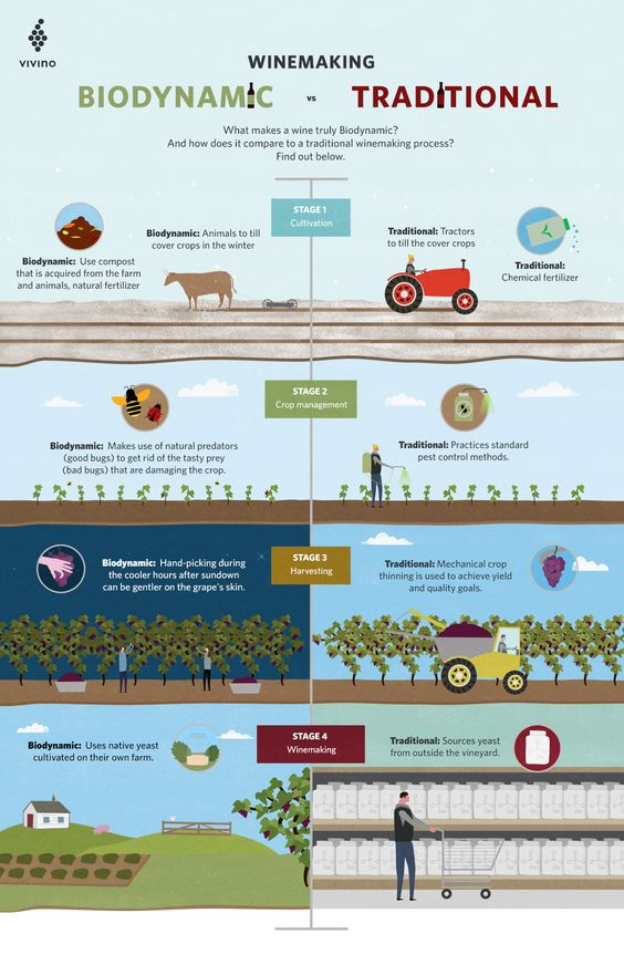 Biodynamic vs Traditional
