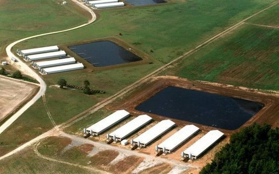 Confined Feedlot Operation