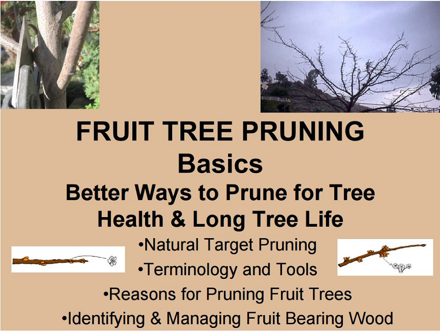 Fruit Tree Pruning Basics