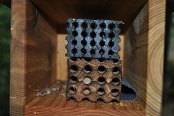 Bee Tubes