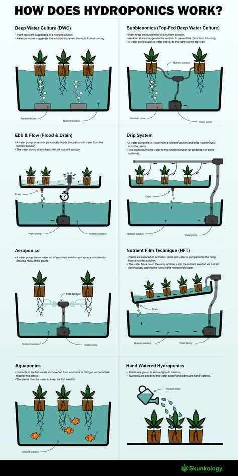 How Does Hydroponics Work?