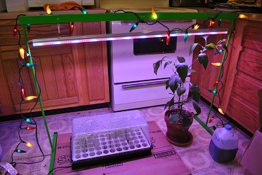 Jalapeno Christmas Lights