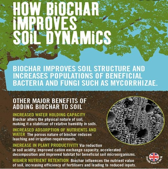 How Biochar Improves Soil