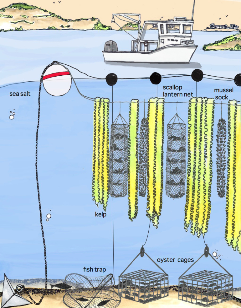 3D Ocean Farming