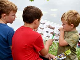 Help protect Ontario's endangered freshwater turtles
