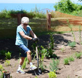 Bayfield volunteers plant rain gardens