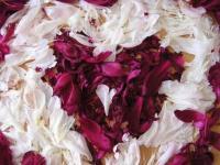 flower petal hearts