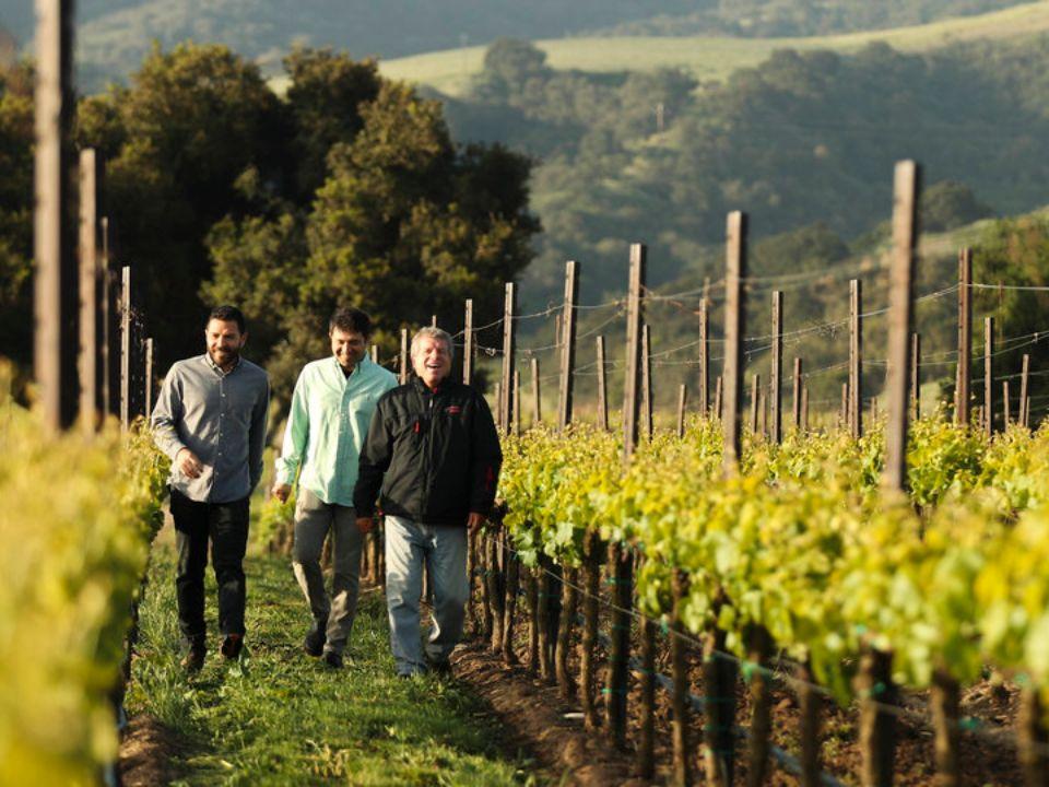 Nick, Adam & Gary walking through vineyards