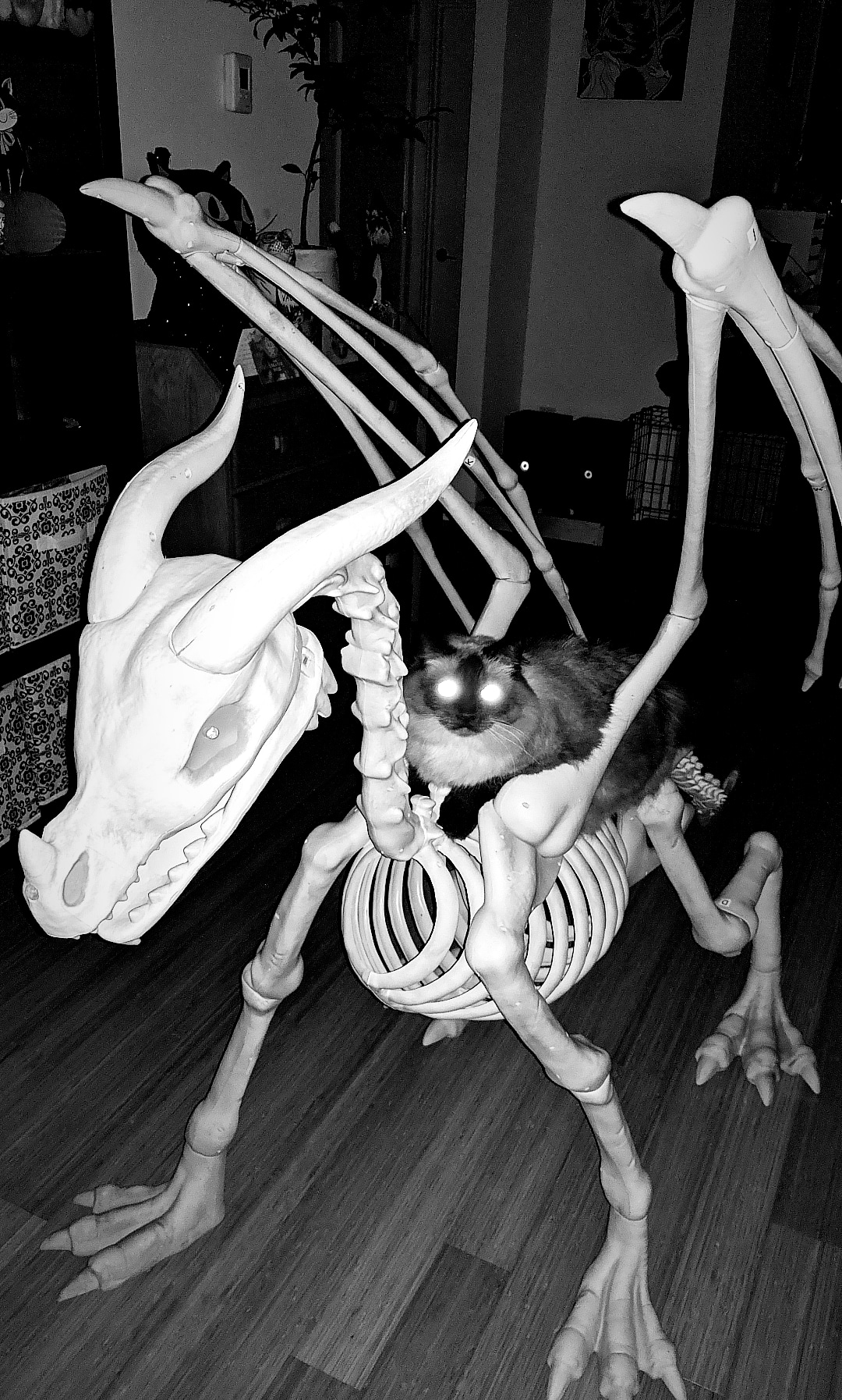 Zeta and the bones Halloween dragon