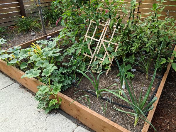 North garden bed