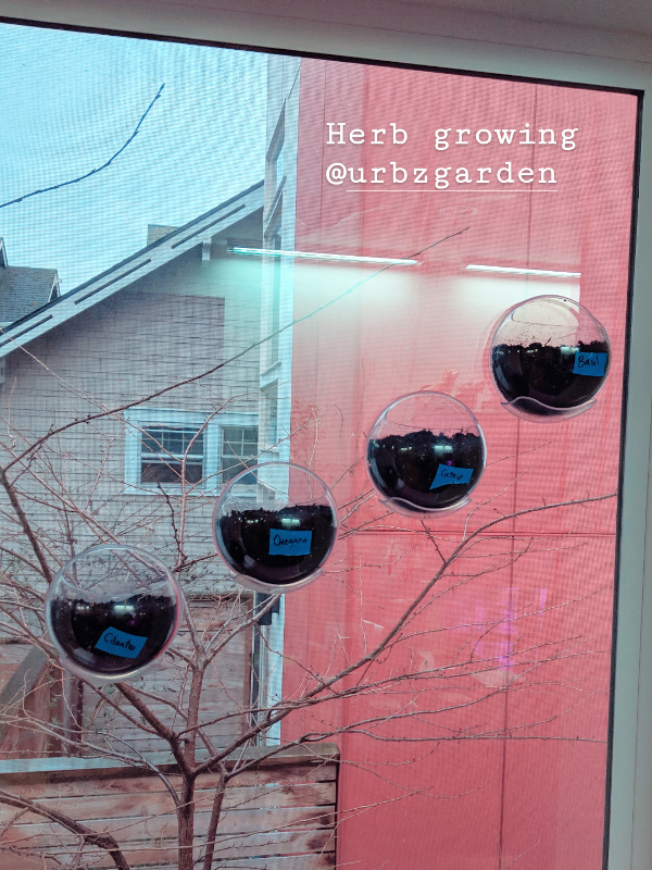 Herb growing with urbz pots on the window