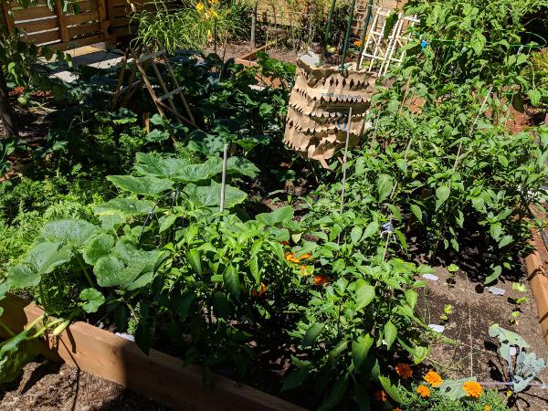 South garden bed