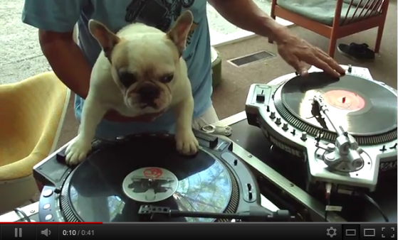DJ Doggy is in the House
