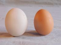 Eggs - Root n Roost Farm
