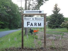 Root 'N Roost Farm, Farm Stand Opens May 23rd
