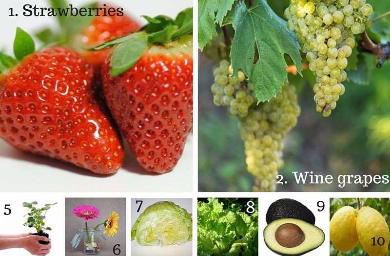 Top crops