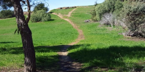 grassy hill with diverging trail