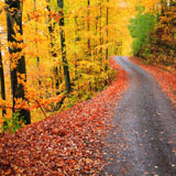 Image: Country Road in Fall