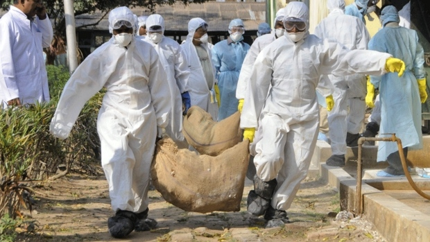 Grippe aviaire dans des élevages foie gras en France: une catastrophe pour les animaux et pour les humains? 6c6479d7-0c67-4b20-b0c7-d719e8d58572