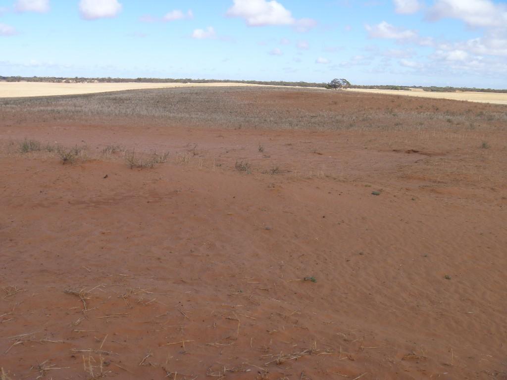 Before sand dune reclamation on Robert Matthews' farm