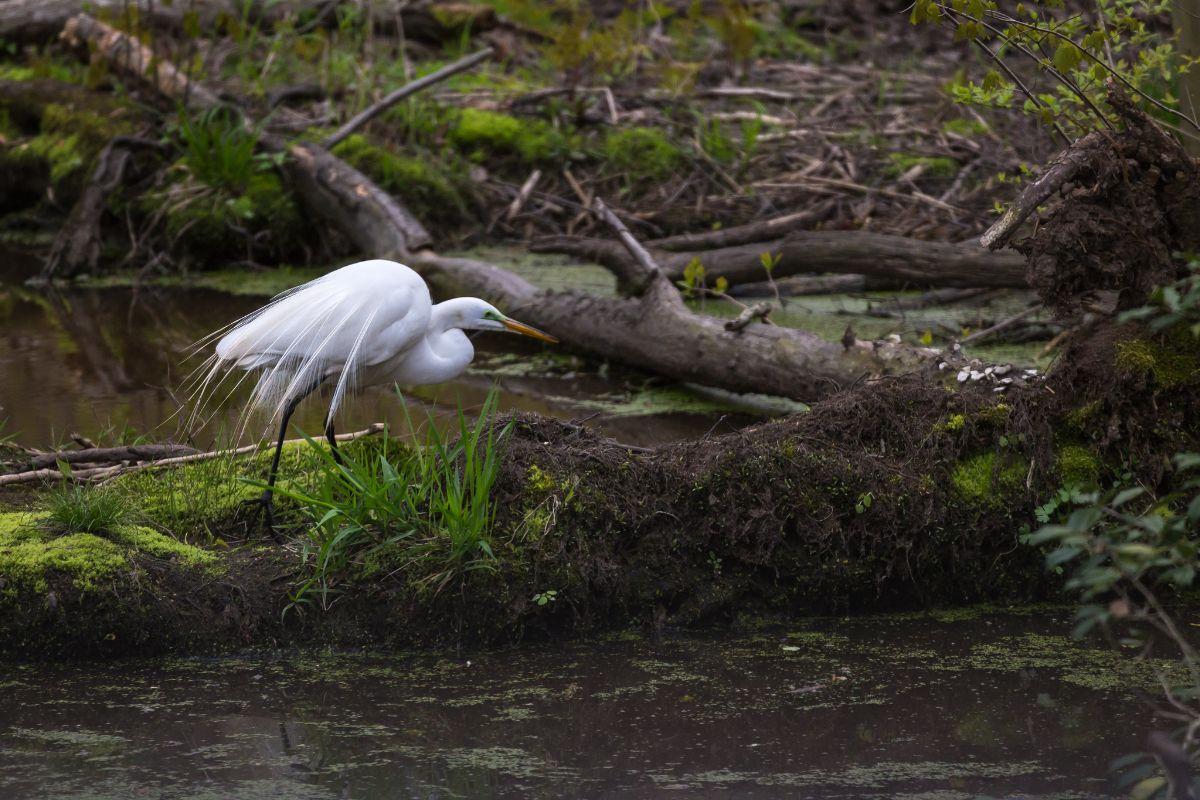 Bombay Hook National Wildlife Refuge. Photo by Kayt Jonsson/USFWS.