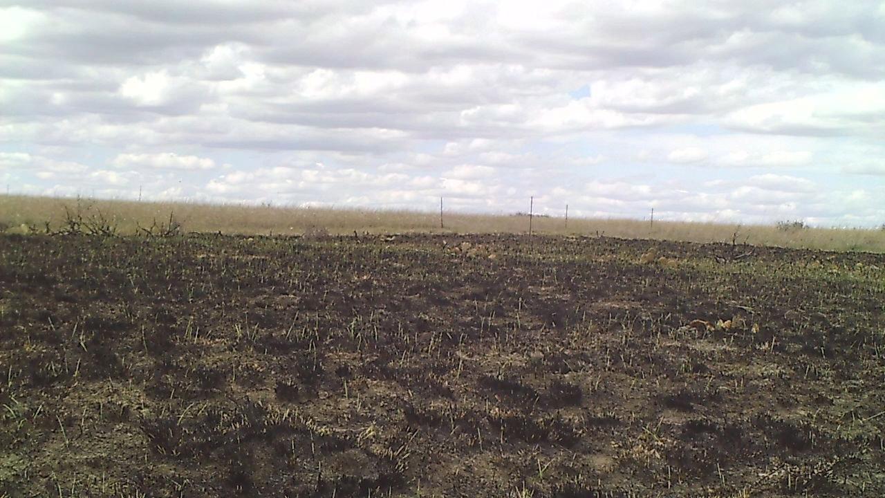 Northern mixed-grass prairie at Ft. Keogh, MT ARS station post-burn 2015.