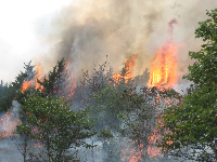 Cross timbers of Oklahoma with a canopy fire.
