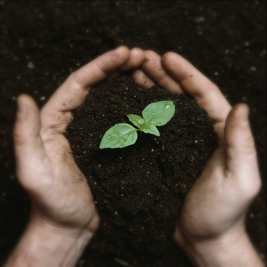 Image of clasped hands holding soil with a tiny sprouting plant