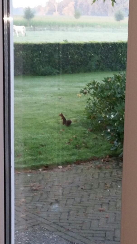 Een jonge eekhoorn zomaar voor de tuindeur